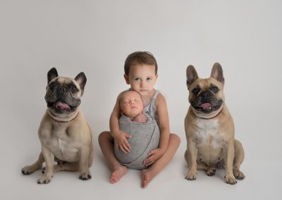 newborn baby with dogs and sibling